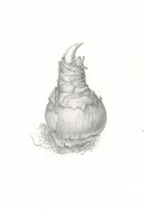 Bulb I