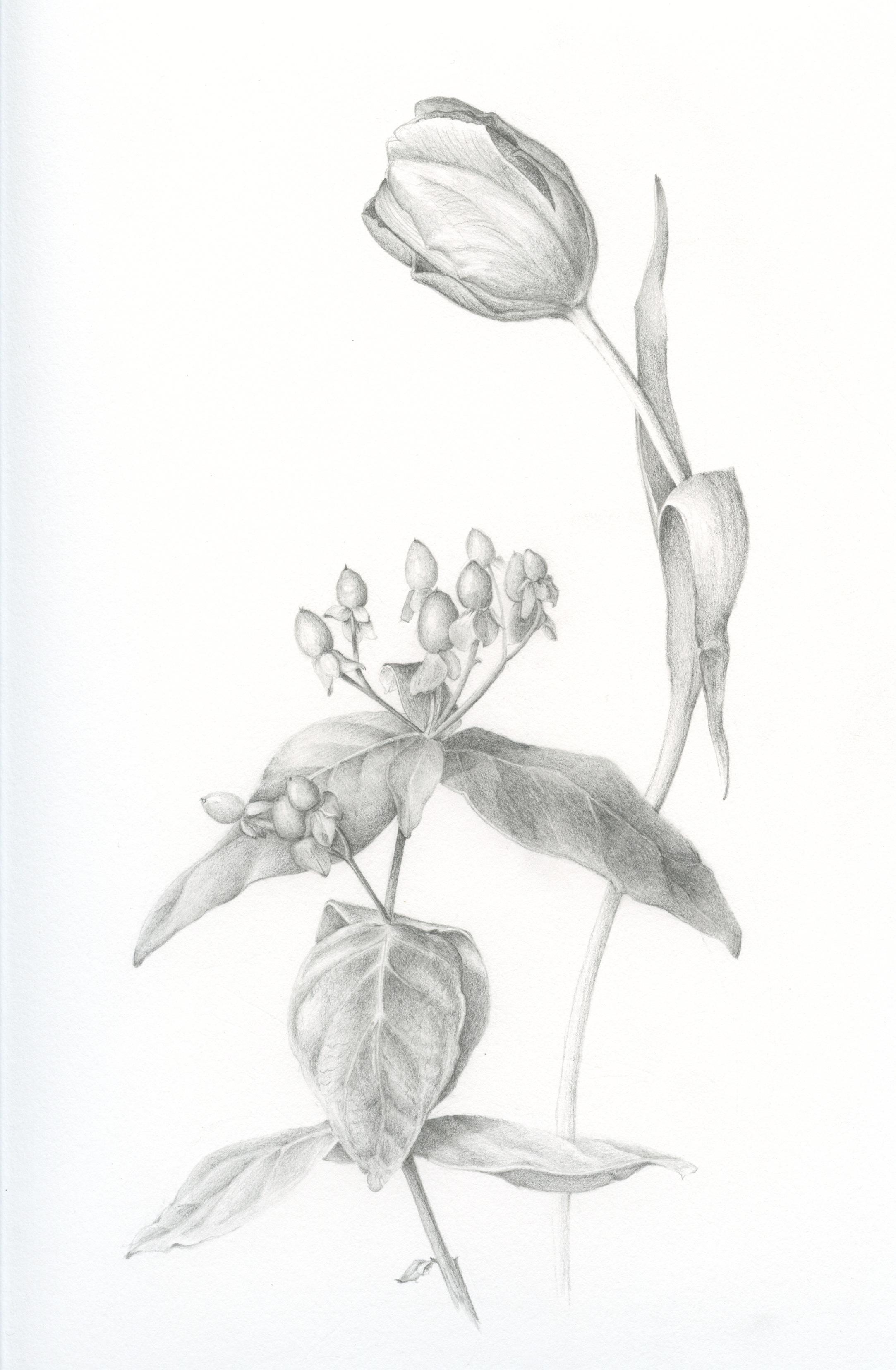 drawing – Susan Sapa...